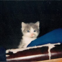 TINY BABY ARTHUR